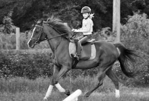 horse fav